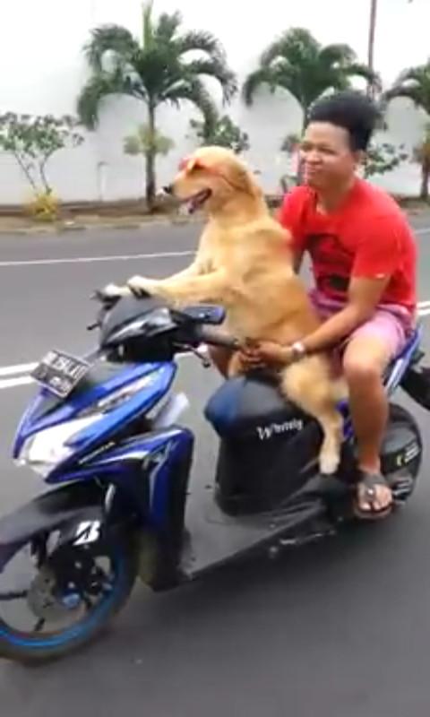 Wah Bener Bener Anjing Tuh Yang Naik Motor Warungasep